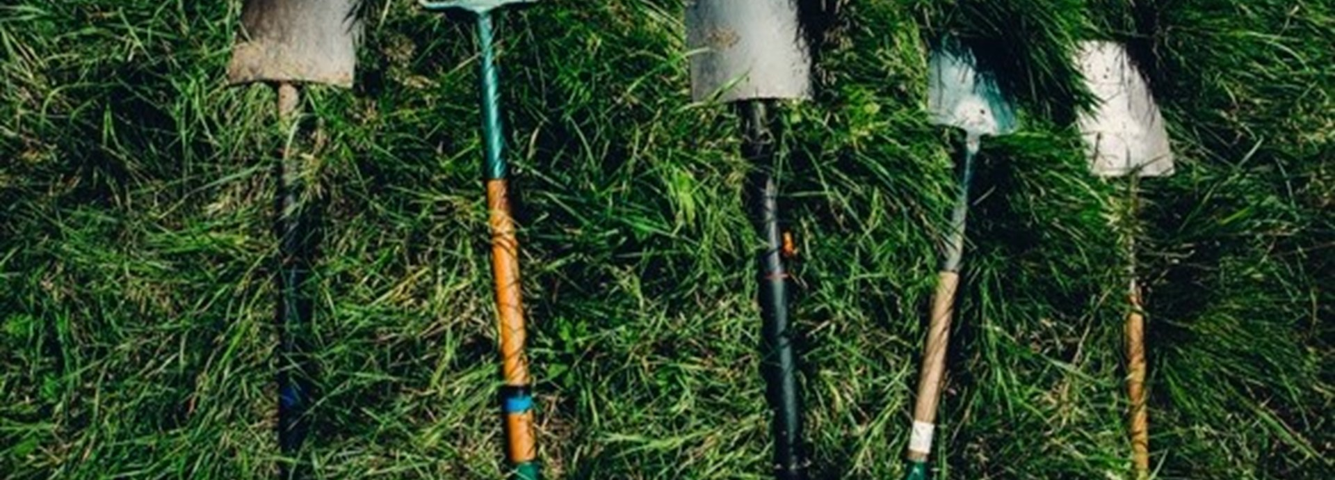 Gardening tools laid out on grass